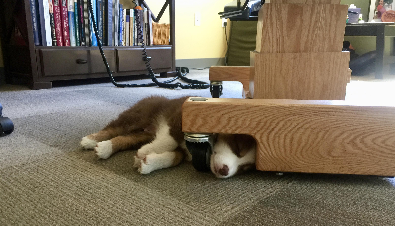 Frankie Sleeping