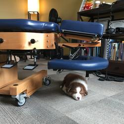 Frankie Sleeping Under Drop Table