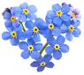 Forget me not flowers in a heart shape