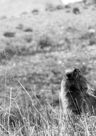 Marmot - Tignes