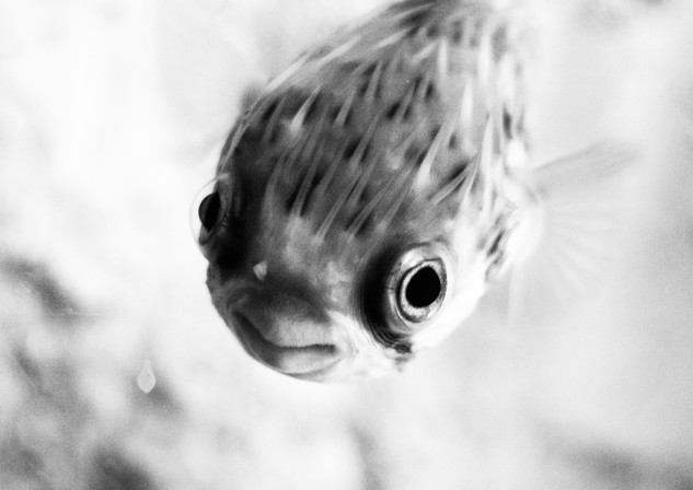 Aquarium - La Rochelle