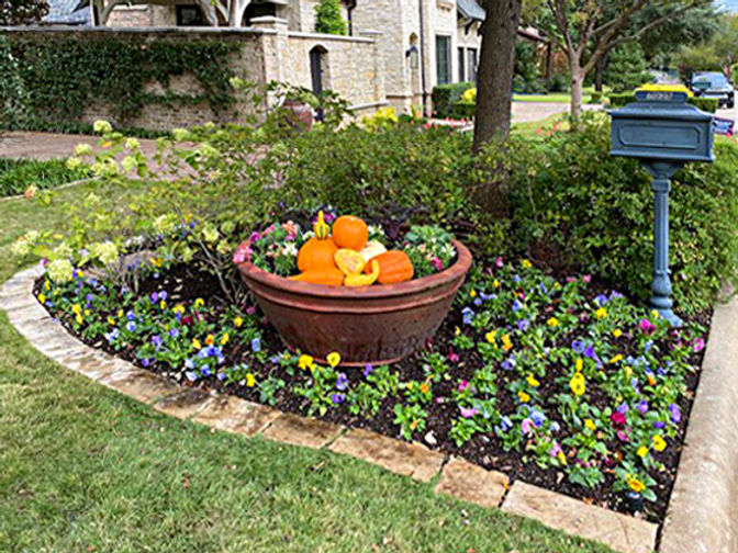 Freshly planted curbside fall flower bed and large planter with pansies, pumpkins and gourds.