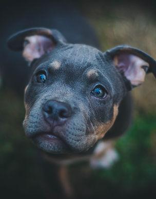Собака Портрет