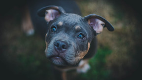 Starromania unterstützt Special Dogs