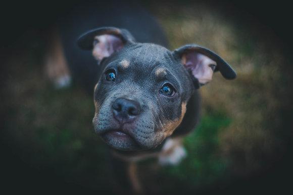 Kurs Dogsitter-opiekun psów