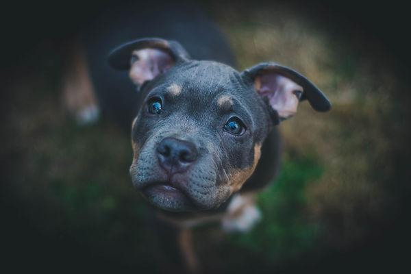 Retrato de perro
