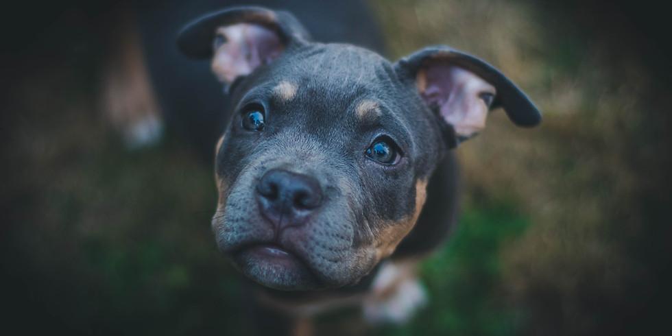 Puppy Preschool - 4 Week Program - NEW START DATE