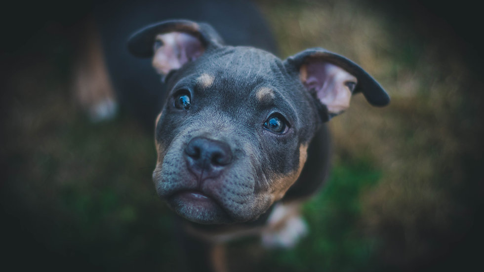 Tailored Support Plan (Medium Dog: 10 - 25kg)