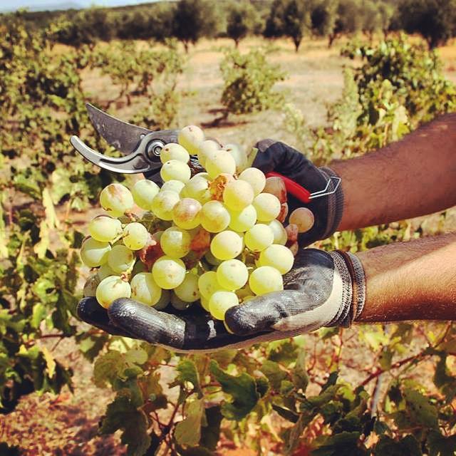 Grapes = Wine