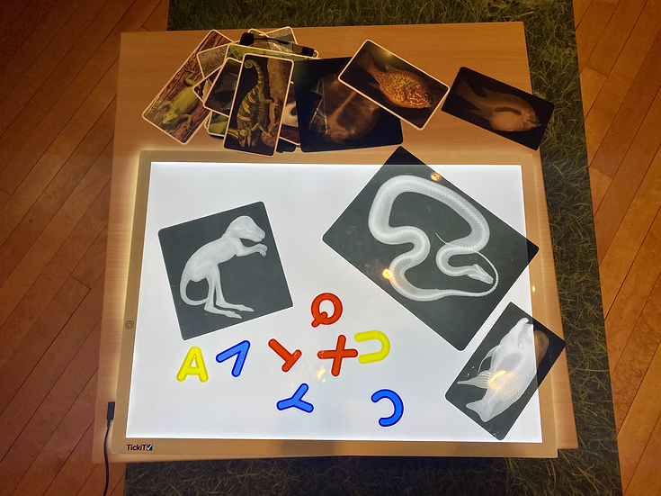 letters and transparent photos on a light table