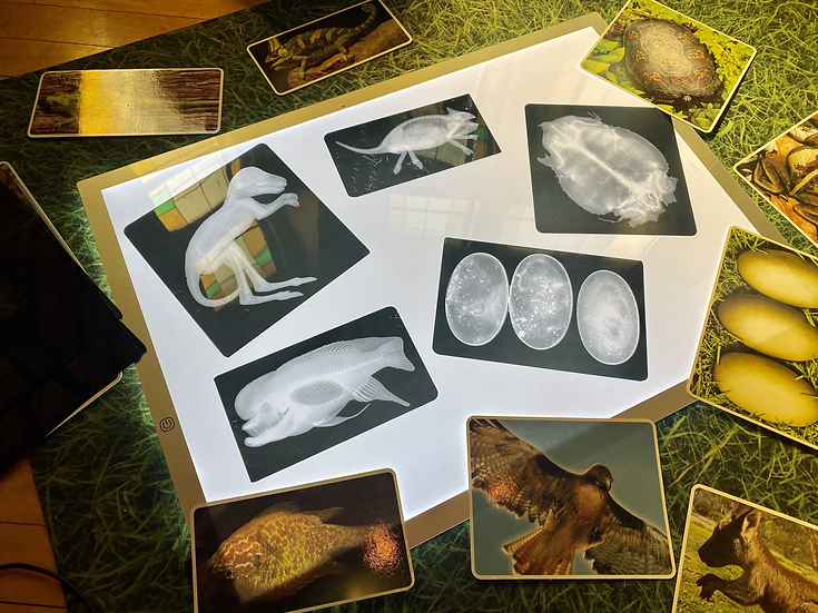 x ray pictures on a light table