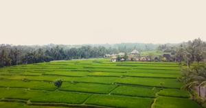 Arrozal de Bali desde dron