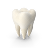 Tooth.G01.watermarked.2k.png
