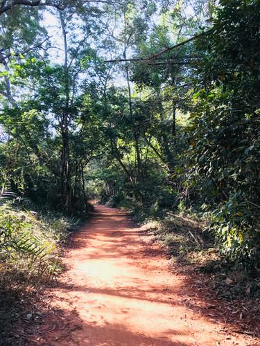 Auroville Forest walk.jpg