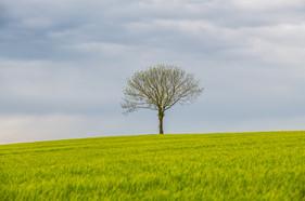 Landschaft (1).jpg