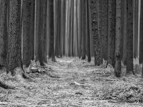 3.Januar 2021...allein im Wald