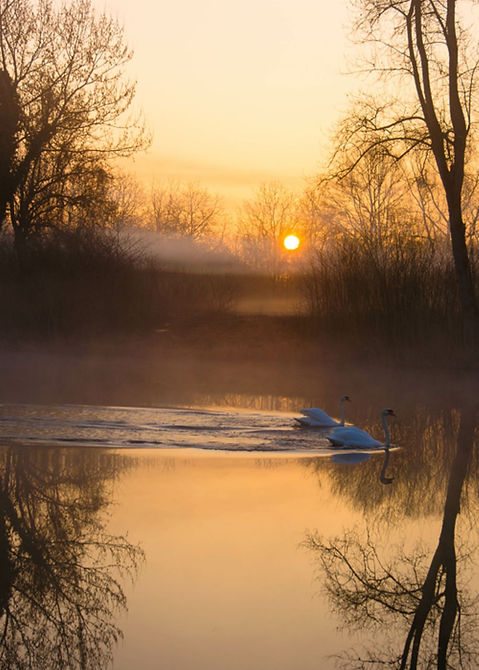 Swan Pond.jpg