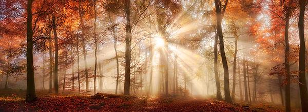 tree grove sunrays_2450x900.jpg