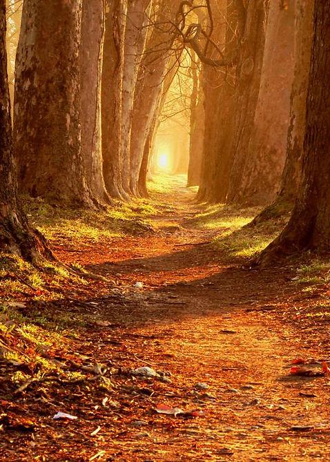grove path.jpg