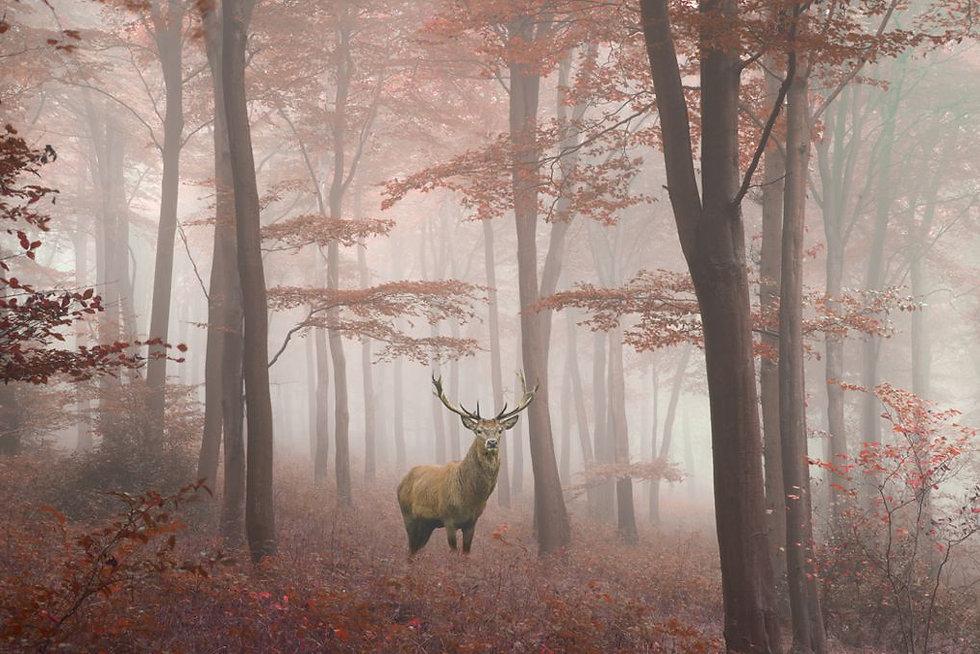 Elk Grove 1000x680.jpg