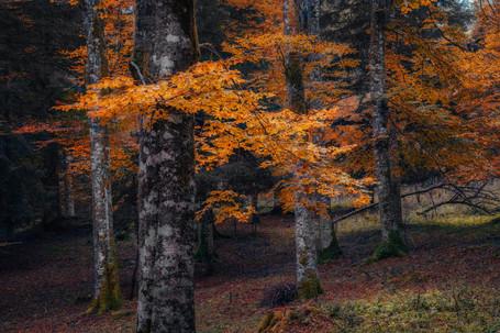 Cansiglio_18-10-20-19-PSedit.jpg