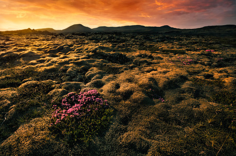 Islanda_2015-3018-1.jpg