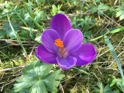 Endlich Frühling! Starthilfe für Ihren Garten