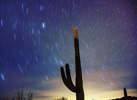 cactusstars.jpg