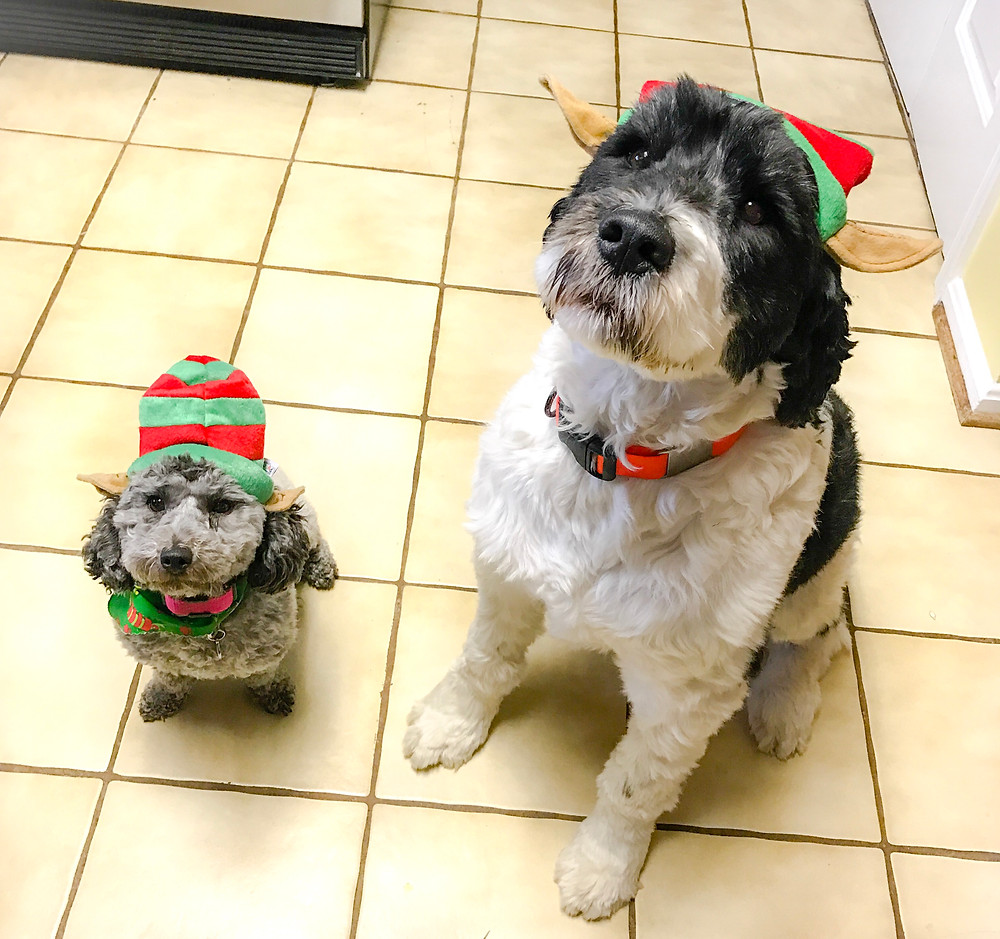Puppy Elves