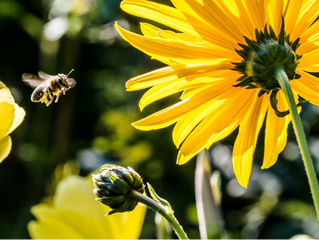 This is How Gardeners Can Help to Protect Bees