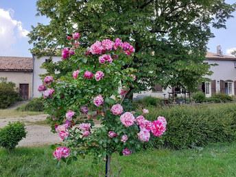 Fleurs Oasis 7juin21_4 - réduite.jpg