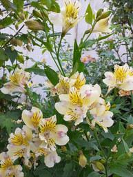Fleurs Oasis 7juin21_5 - réduite.jpg