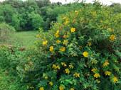 Fleurs Oasis 7juin21_2 - réduite.jpg
