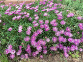 Fleurs Oasis 7juin21_3 - réduite.jpg