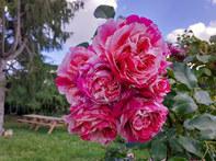 Fleurs Oasis 7juin21_1 - réduite.jpg