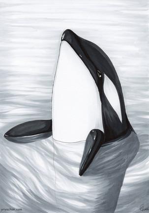 Orca (Inktober 2018)