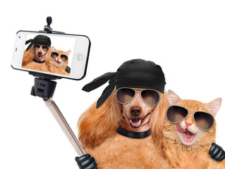 Great tips on Pet Photography!