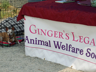 Help Save Gingers Legacy!