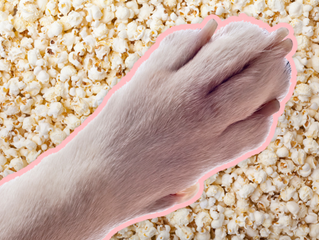 I bet your dogs feet smell like popcorn!!