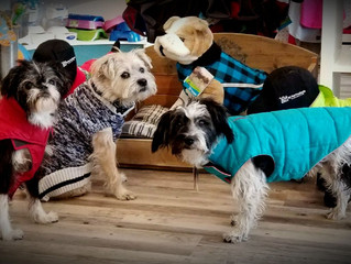 Check out our pictures in this blog for great solutions to help keep your dog warm and protected thi
