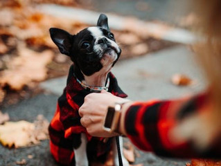 FLANNELFEST 2020 - Best Dressed Dog Contest!