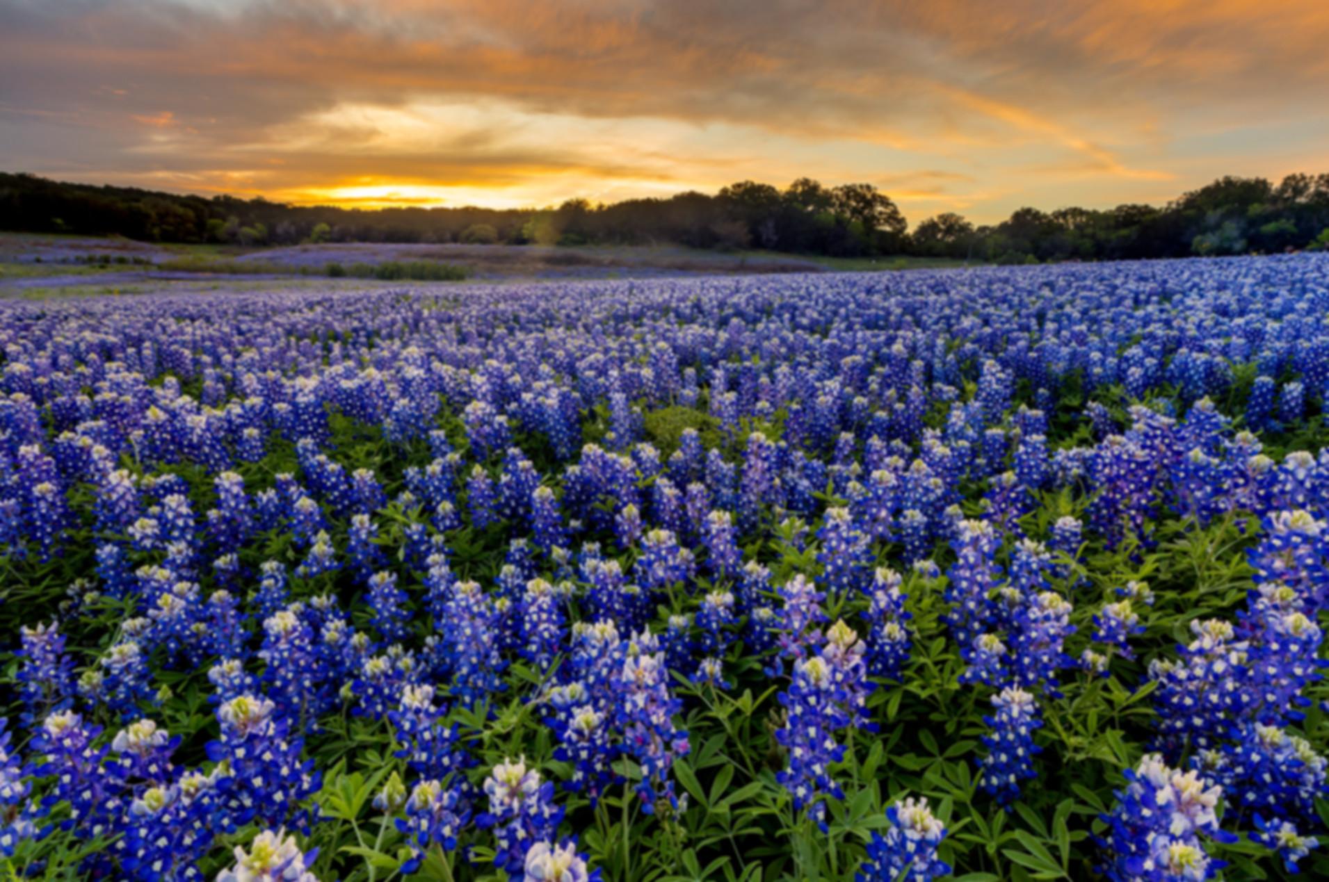 Insurance Chandler, Texas