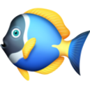 tropical-fish_1f420.png