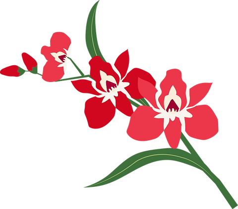 orchid4.png