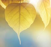 Leaves in Sund.jpeg