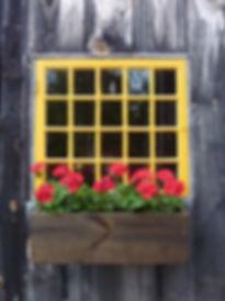 Geranuims in Window, Karen Sprague.jpg