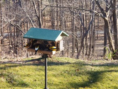 Great Backyard Bird Count anyone?