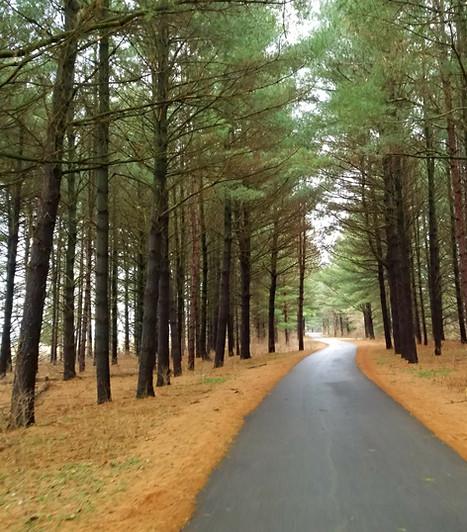 Biker trail