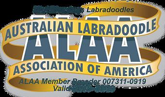Mini Blessings Labradoodles ALAA Interna