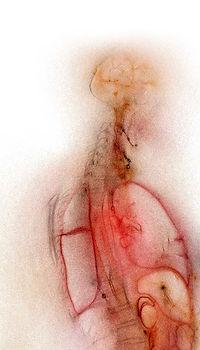 Symbolic-Anatomy_edited.jpg